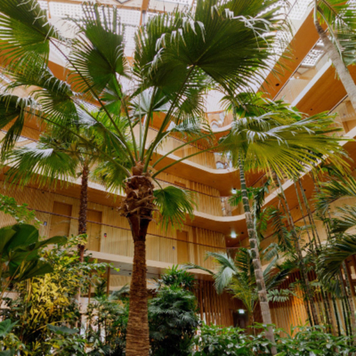 360º photo subtropical indoor garden